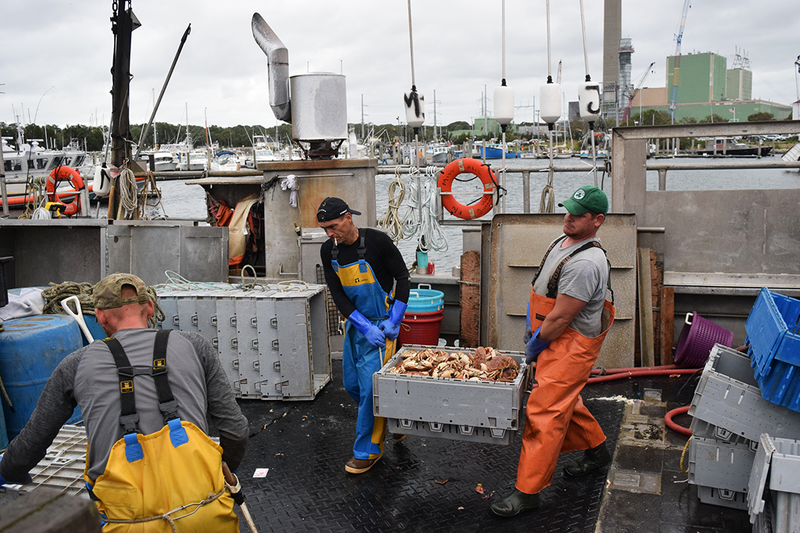 Jonah crab landings have tripled in the past decade, from about 4 million in 2007, to 12 million last year.