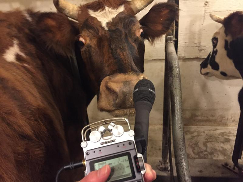 Roanne inspects my digital recorder and says 'No Comment.' Everett noted her contribution that night: 16 pounds of milk.