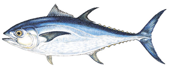 Weekly Fishing Reports for Offshore New England - The ...