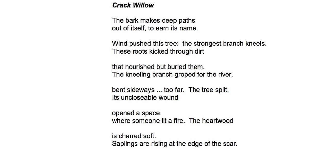 how do you summarize a poem