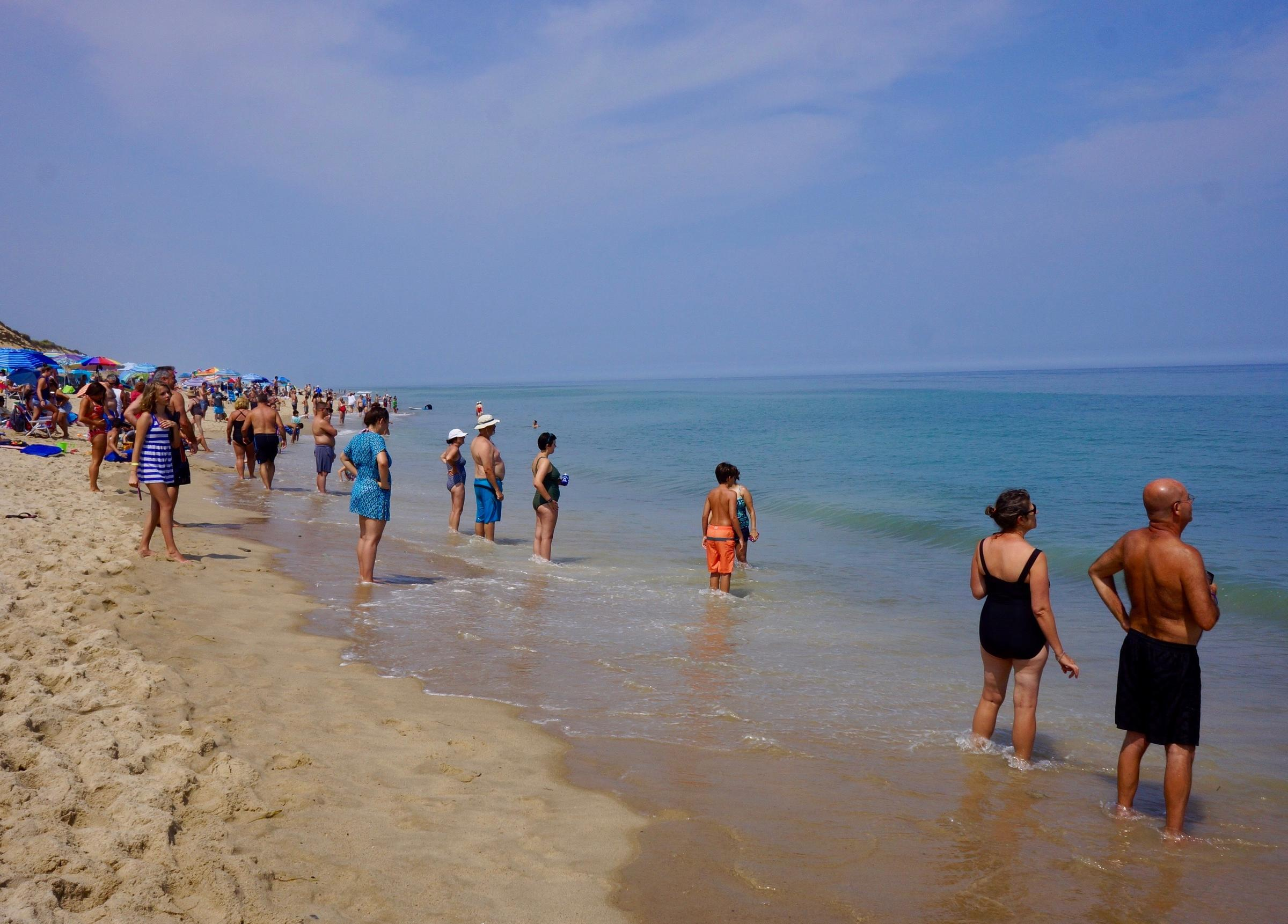 An image from a Wellfleet beach earlier this summer as beachgoers study the water after a closure for a shark siting