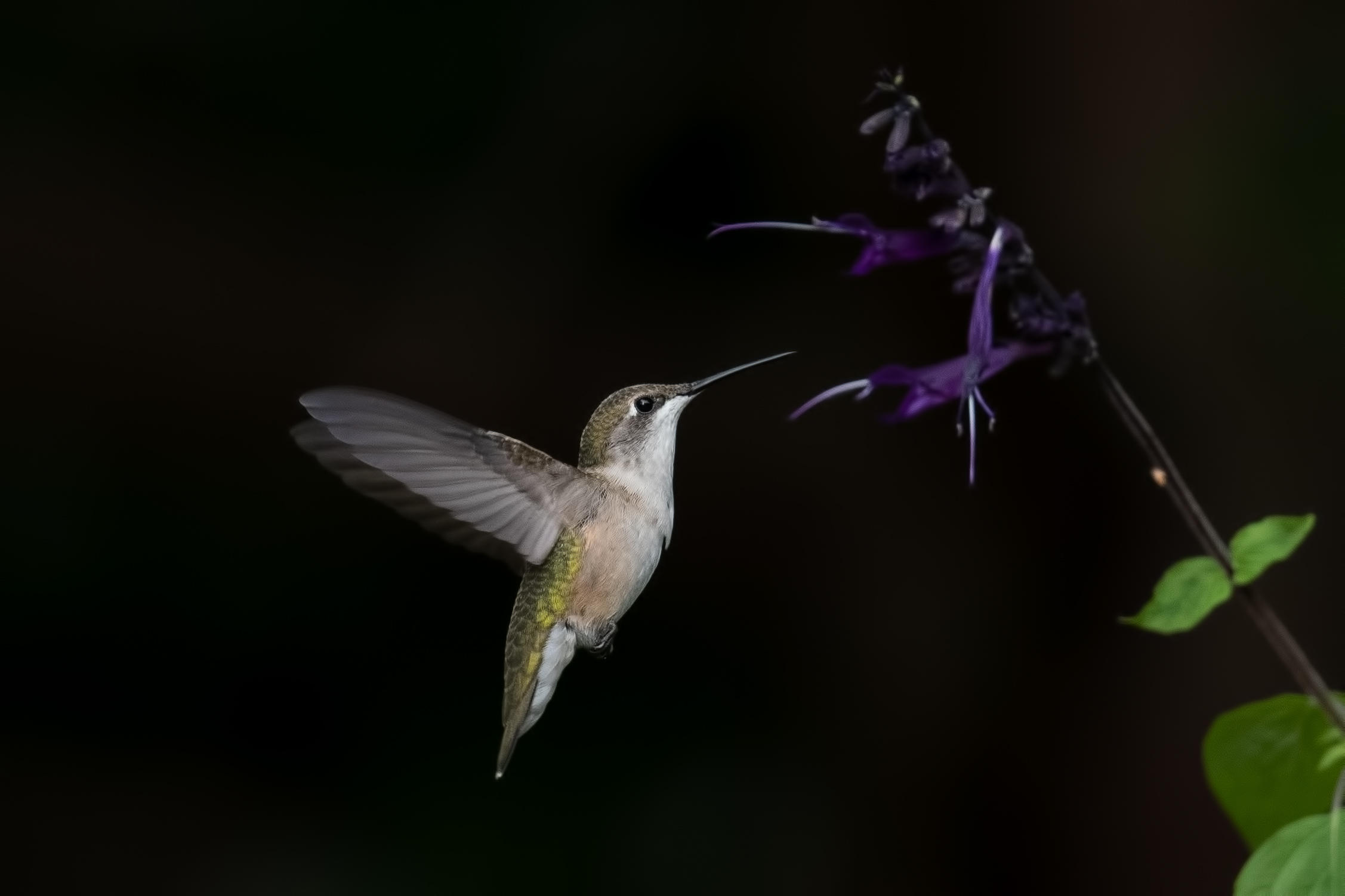What To Plant Attract Hummingbirds