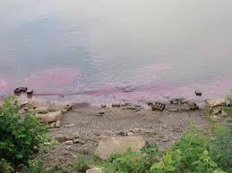 Fuel oil contaminates Ohio River near Duke Energy plant