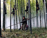 Bamboo Ballet