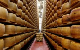 Aging wheels of Parmigiano Reggiano - Parmesan Cheese