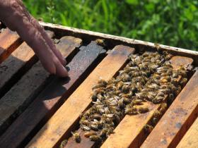 Carolyn Hudon surveys one of her bee hives.