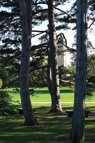 illinois state university gets national tree campus title peoria