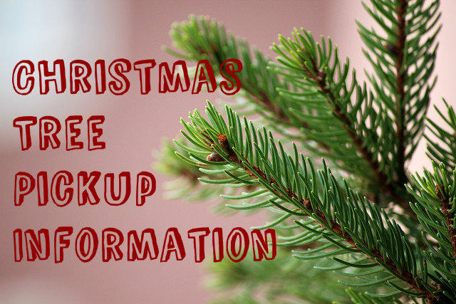 After Christmas festivities are over and the presents are all unwrapped,  the next task is figuring out how to dispose of the Christmas tree before  the cats ... - Christmas Trees Peoria Public Radio