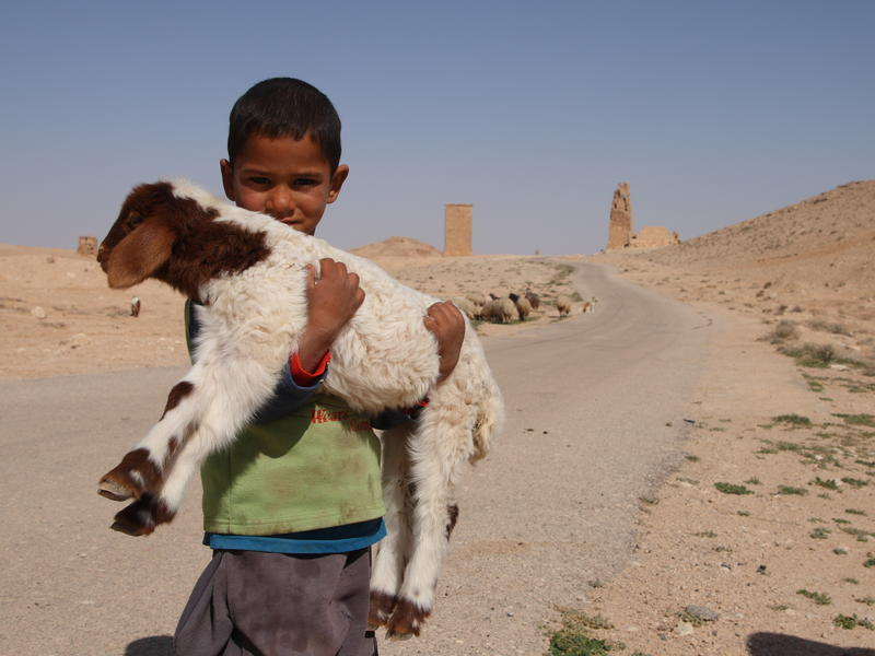 A young Syrian boy herds sheep with his father near Palmyra. Syria has been in turmoil since  the civil war of 2011. The UN estimates some 13.5 million Syrians are in need of humanitarian aid, and several million have fled the country.