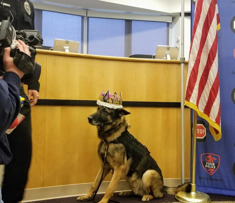 Ahen is such a good nature dog and ever the professional on duty. After all, it was his job to put on the crown Wednesday at Pekin City Hall for the Aftermath award.