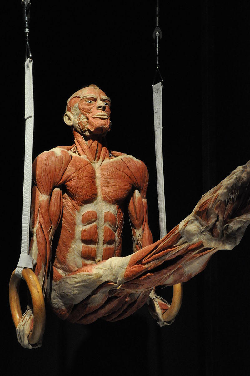 Jump Tests Cadaver Alternative For Anatomy Ed Peoria Public Radio