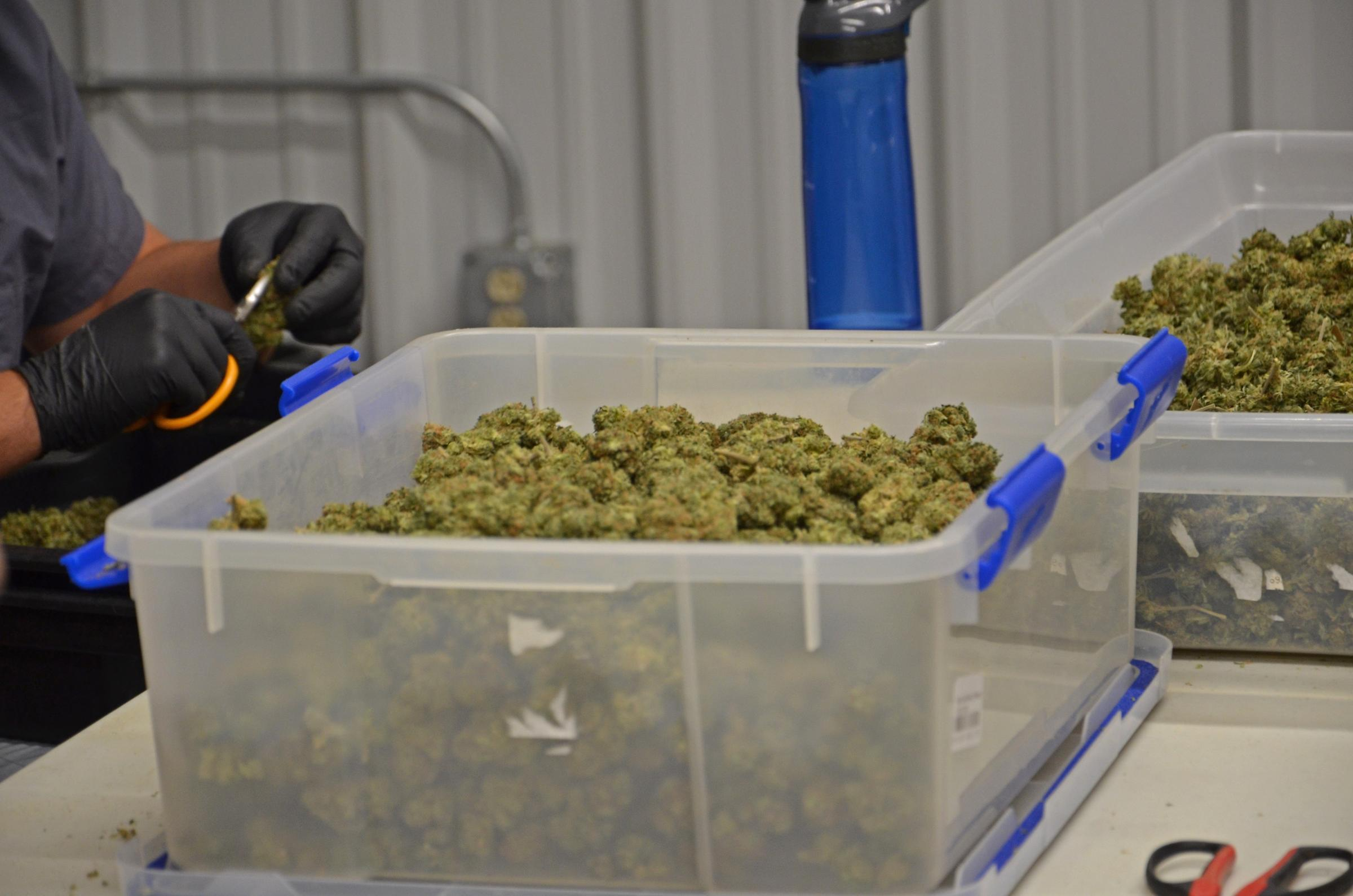 Illinois fulton county vermont - Buds Are Cleaned Before Being Sent Off For Processing