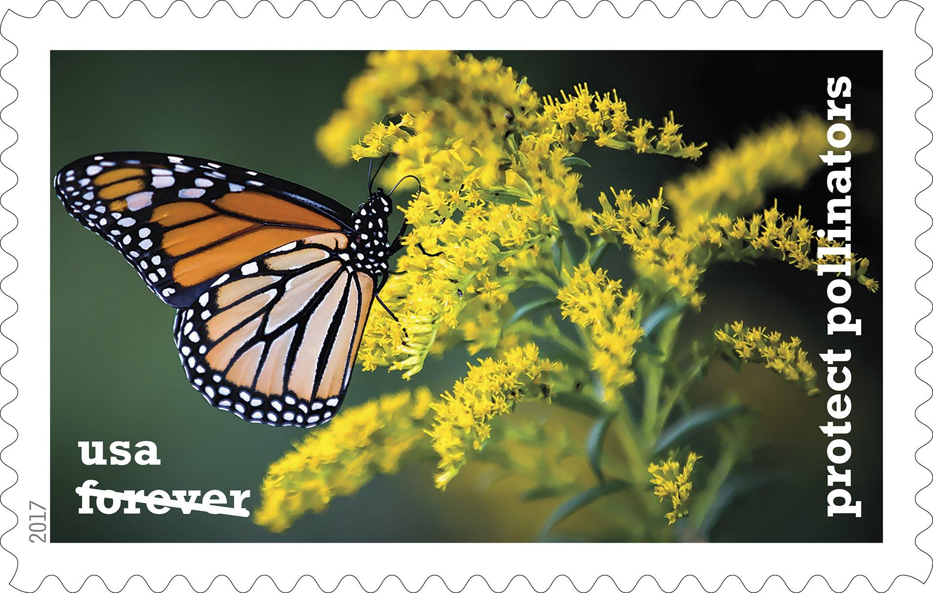 springfield photographer s butterfly shot featured on stamp  fowler s picture was taken in 2015 and was originally featured in a photo essay about monarch butterflies migrating from and the northern