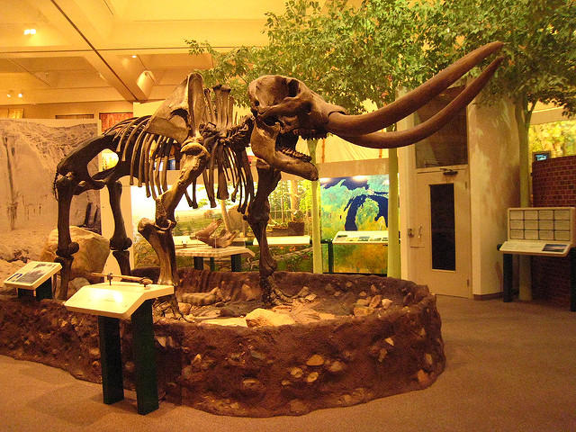 Mastodon skeleton at the Alden B. Dow Museum of Science and Art