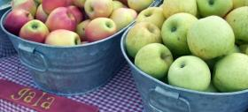Apples are arriving at area tailgate markets!