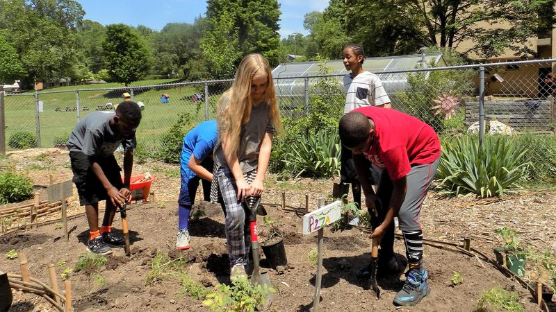 5th graders at Hall Fletcher Elementary work in the pizza garden.