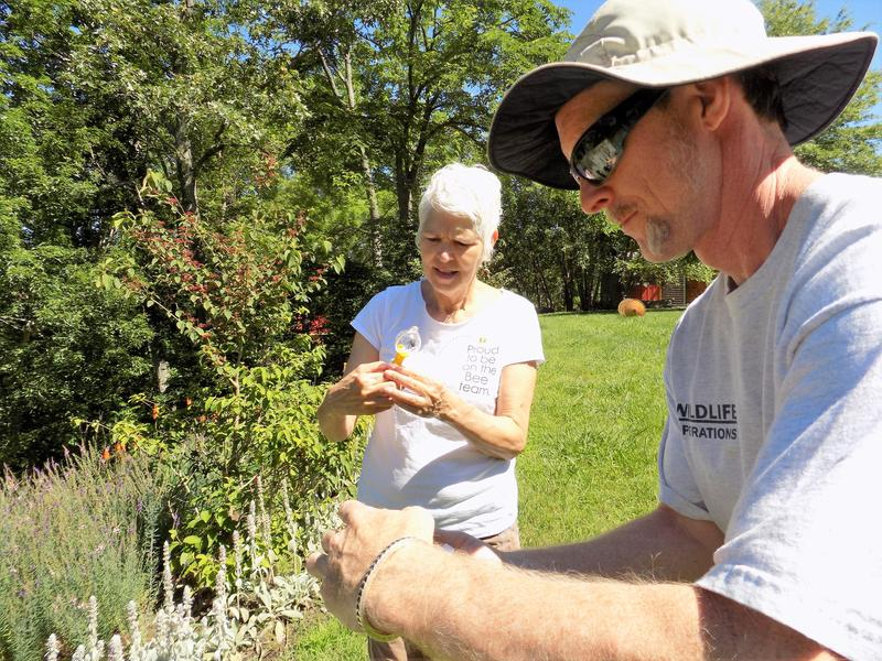 What about this one?  U.S. Fish and Wildlife biologist   Bryan Tompkins  and Bee City USA founder Phyliss Stiles survey the bee population in a garden in Madison County.
