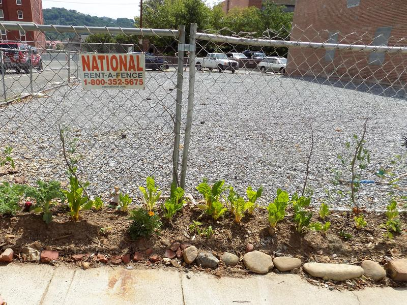 Flowers and herbs sprout near the fence that encloses an empty gravel lot along Page Avenue.