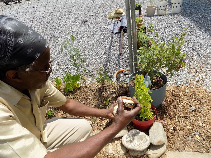 """Melvin Smith adds some of his """"magic water"""" to the plants that line the fence along Page Avenue."""