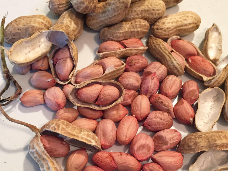 Peanuts are grown all over the south, and for the most part, it's really only southerners that tend to enjoy boiled peanuts.