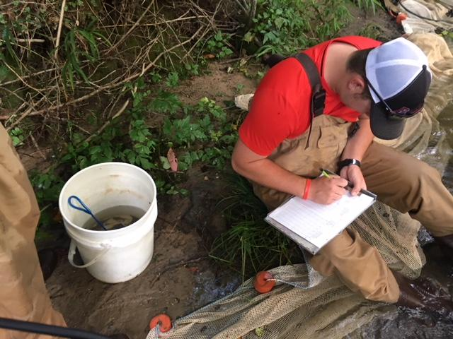 The team keeps track of how many fish of each species are found in the creek.