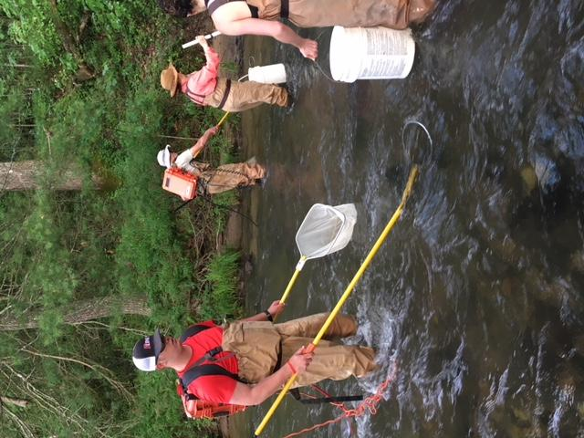 The team of volunteers uses a fishshocker and nets to study the fish in Middle Creek in Macon County.