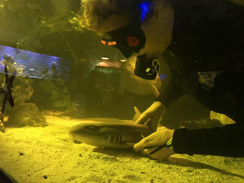 Brenda Ramer massages a  Bamboo Shark  and other ocean creatures  at Team ECCO Aquarium and Shark Lab in Hendersonville.