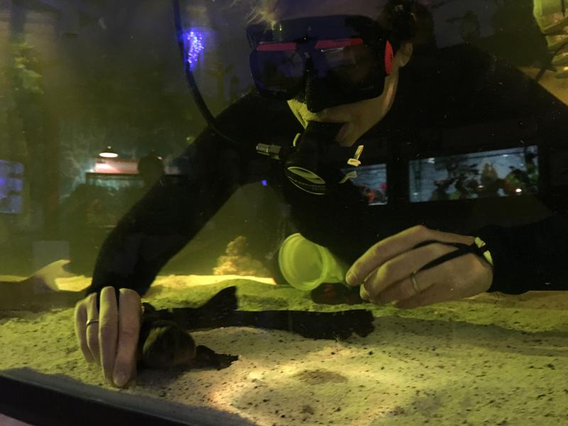 Brenda Ramer feeds the Bamboo Sharks and other ocean creatures  at Team ECCO Aquarium and Shark Lab in Hendersonville.