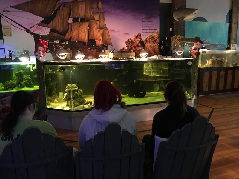 Visitors watch as Brenda Ramer feeds the Bamboo Sharks and other ocean creatures  at Team ECCO Aquarium and Shark Lab in Hendersonville.