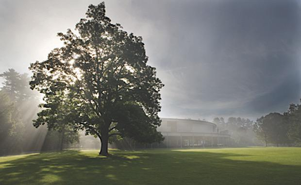 Tanglewood lawn and Shed