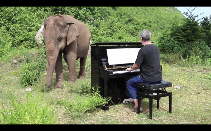 Pianist Paul Barton plays Bach for elephants in Thai sanctuary