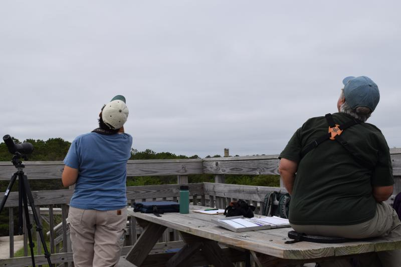 Jen Ottinger and Sue Groomer watch for raptors at Cape Henlopen State Park.