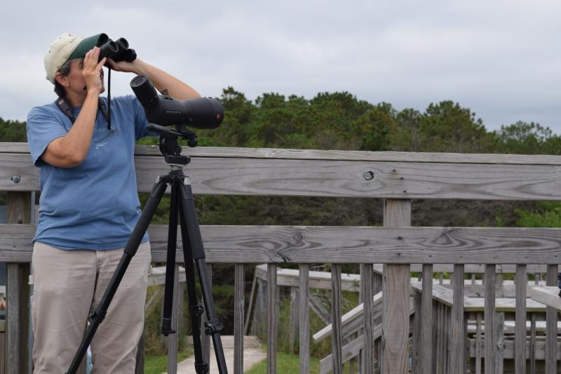 Jen Ottinger uses binoculars and a spotting scope to watch for raptors at Cape Henlopen State Park.