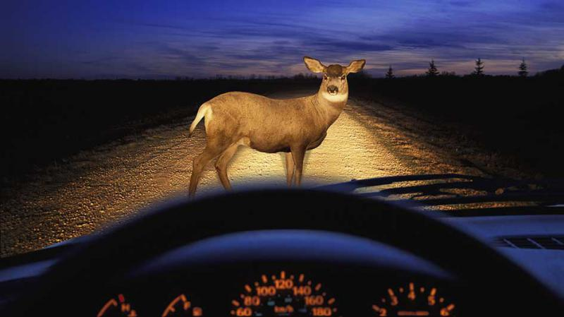 Fall is officially here and AAA Mid-Atlantic is warning drivers to be more cautious on the roads. Deer mating season is right around the corner and October, November and December are the worst months of the year for motor vehicle collisions with animals.