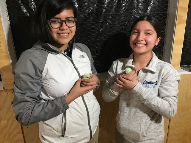Woodbridge students Esther Aguilar (left) and Julie Villalobos (right) hold baby chicks.