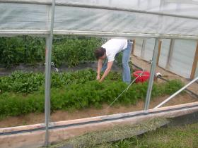 Student worker at UK's South Farm