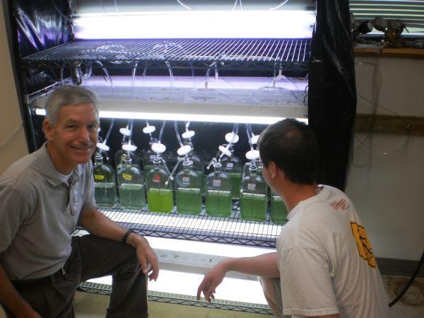 Growing Algae Based Oil in the Lab