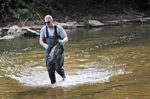 Kentucky State Police Detective Gary Travis wades through the Gasper River on Thursday as he collects meth making supplies that had been dumped there.