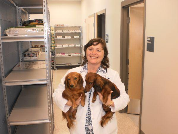 Veterinarian Lynn McMaine with a handful of dogs at the Fayette Schools' clinic