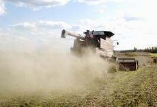 Pat Owsley leaves a trail of dust behind the combine Monday as he helps Kevin Mobley harvest soybeans on a farm west of Elizabethtown on St. John Road.