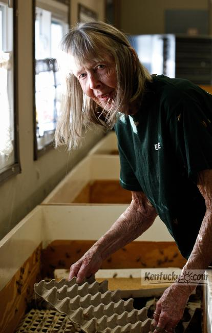 Elaine Henderson of Garrard County, has been farming crickets for approximately 30 years. She and her late husband opened Henderson Cricket Farm in Florida, but moved their operation to Kentucky five years ago.