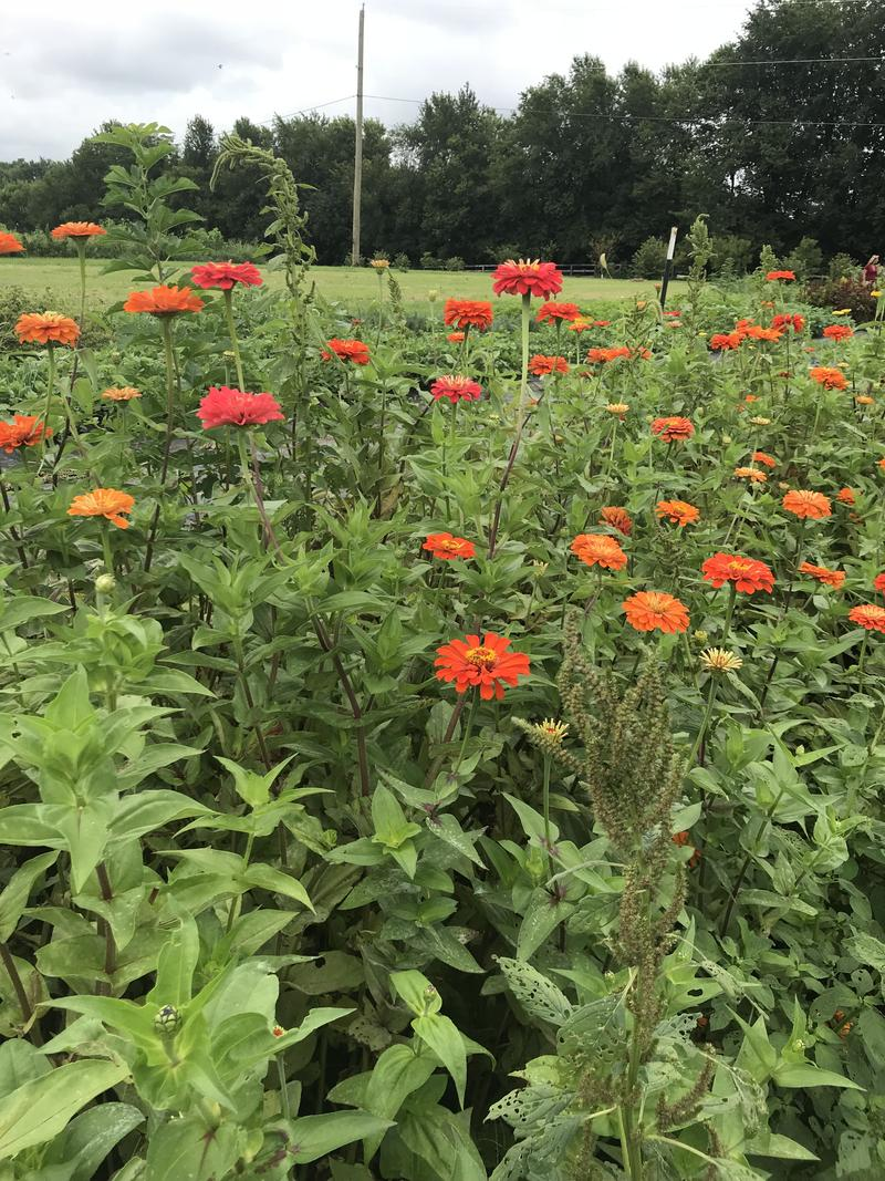 Flowers planted by survivors of intimate partner abuse bloom at GreenHouse 17