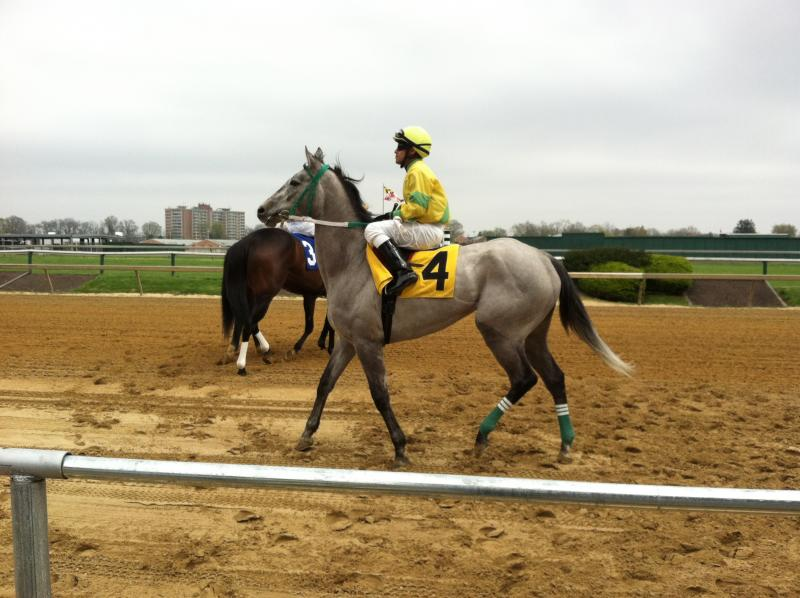 Running on Pimlico's dirt track.