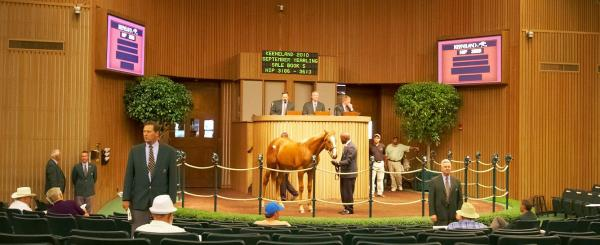 Keeneland's September Yearling Sale, 2010.