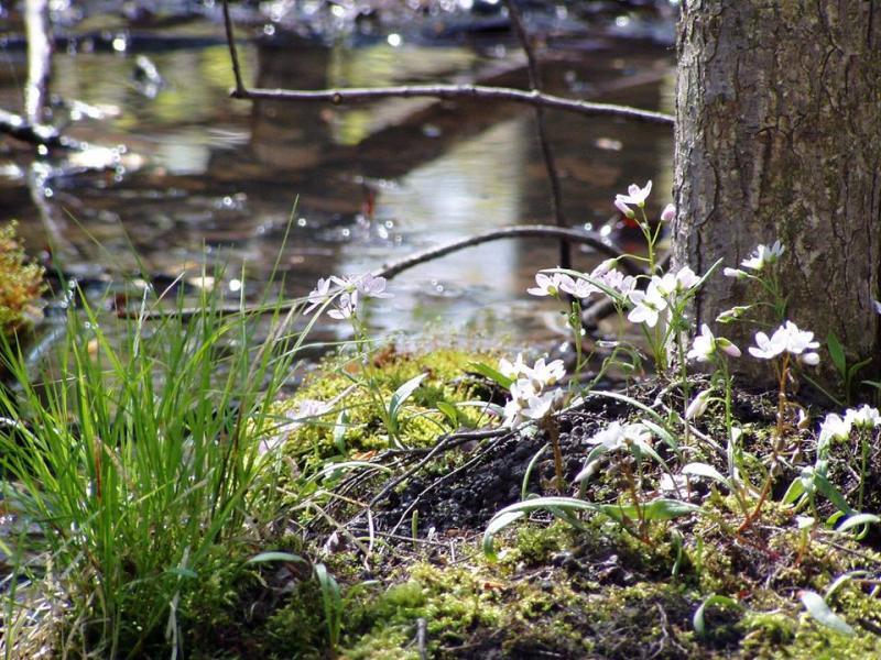 Creekshead Preserve