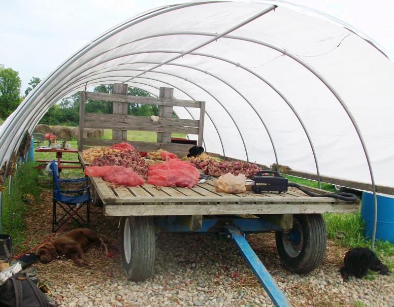 Green Things Farm