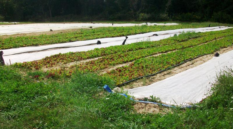 Seeley Farm