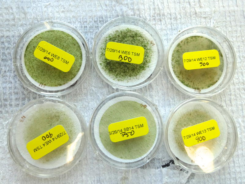 Algae samples at the NOAA lab in Ann Arbor
