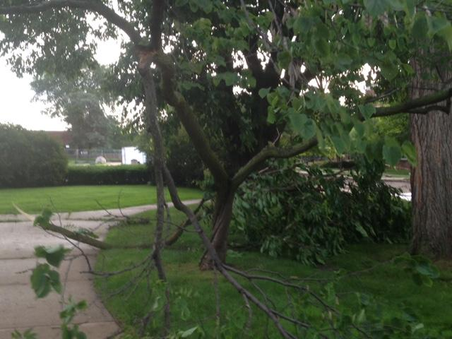 Ypsilanti storms, tree damaged.