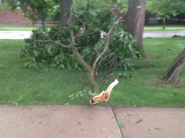 Downed tree branches on the Eastern Michigan University campus